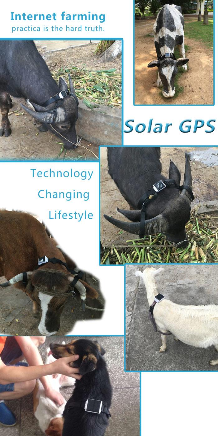 solar gps tracker for cattle